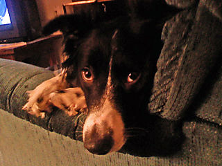 Hang-Dog Dog_edited