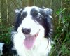The_happy_dog